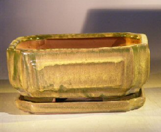 Green Ceramic Bonsai Pot - RectangleProfessional Series with Attached Humidity/Drip tray8.5 x 6.5 x 3.5 Image