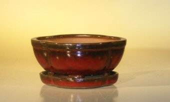 "Ceramic Bonsai Pot With Attached Humidity/Drip tray- Oval 6.37"" x 4.75"" x 2.625"""