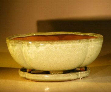Ceramic Bonsai Pot  With Attached Humidity/Drip tray - Rectangle 10.75