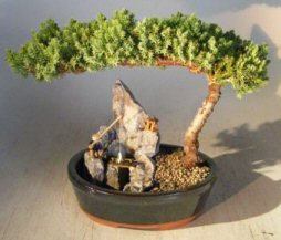 Image: Juniper-Stone Landscape Scene - Large (Juniper Procumbens nana)