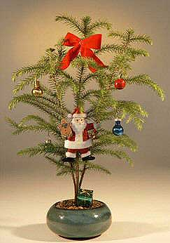 Image: Norfolk Island Pine - With Decorations  (araucaria heterophila) (Available During Month of December Only)