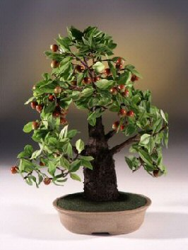 Image: Artificial Crabapple Bonsai Tree