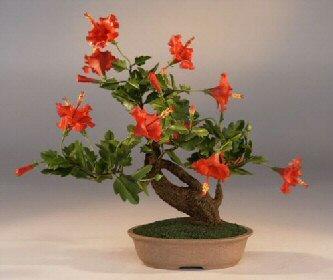 Artificial Bonsai Treeflowering Hibiscus