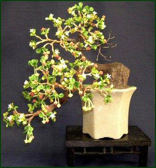 Artificial Fukien Tea Bonsai Tree Cascade Style