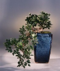 Artificial Chinese Elm Bonsai Tree Cascade Style