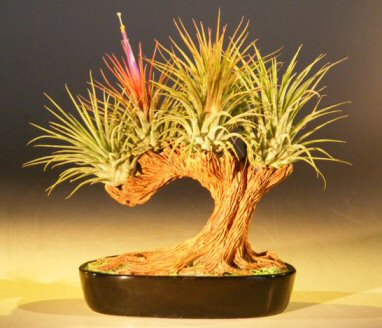 bonsai instructions and tree types