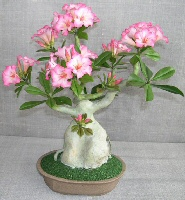 Image: Artificial Flowering  Desert Rose Bonsai Tree