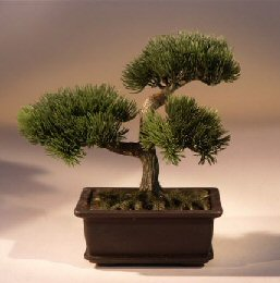 Artificial Japanese Pine Bonsai Tree