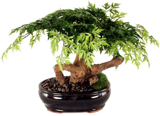 Artificial Aralia Bonsai Tree