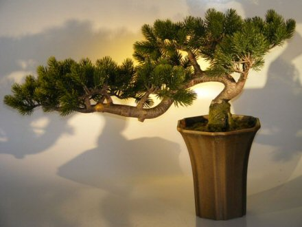 Artificial Pine Bonsai Tree