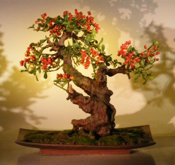 Artificial Pyracantha Bonsai Tree