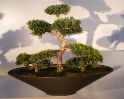 Artificial Cedar Bonsai Tree - Group Planting