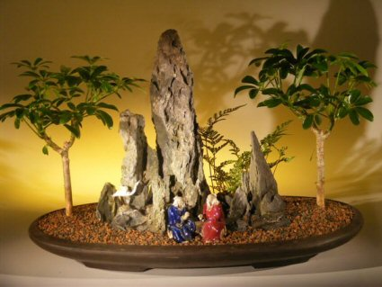 Hawaiian Umbrella Bonsai Tree Rock Landscape (arboricola schefflera)