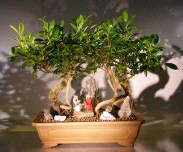 Image: Oriental Ficus Bonsai Tree - Stone Landscape Forest Group (ficus benjamina 'orientalis')