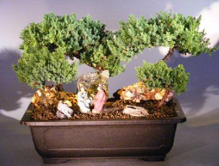 Image: Juniper Stone Landscape Four Tree Forest Scene (juniper procumbens nana)