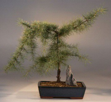 Artificial Bonsai Tree on Potted In A 9  Ceramic Blue Gree Rectangle Container As Shown