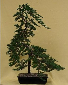 how to create windswept bonsai