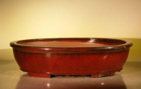 Parisian Red Ceramic Bonsai Pot - Oval<br><i>16.0