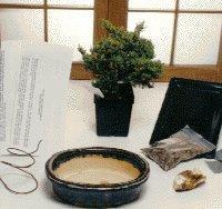 Basic Starter Kit - Juniper Procumbens<br>Make Your Own Bonsai Tree