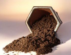 Bonsai Conifer Soil Mix (outdoor & juniper trees) - 2 lbs. (1 Qt.)