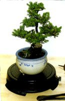 Bonsai Turntable<br>Indoor or Outdoor - 12