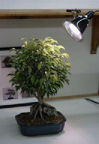 Grow Light Kit - 32 Watt Full Daylight Spectrum <br>(fluorescent grow light 150 watt equivalent)