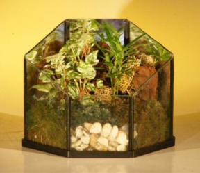 Open Terrarium<br>Indoor Foliage Arrangement