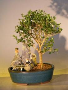 Flowering Mount Fuji Serissa Bonsai Tree - Medium<br><i></i> Stone Landscape Scene<br><i>(serissa foetida)</i>