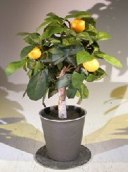 Artificial Lemon Bonsai Tree