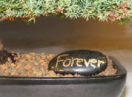 Personalized Skipping Stone - <br><i></i>
